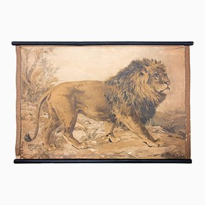 Lithograph Educational Chart of a Lion by Karl Jansky, 1897