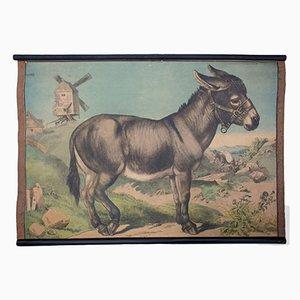 Esel Wandplakat von Karl Jansky, 1897
