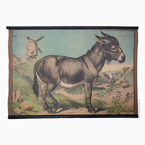 Lithograph Educational Chart of a Donkey by Karl Jansky, 1897