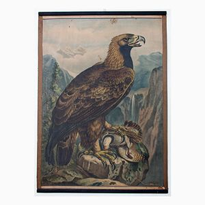 Lithograph Educational Chart of an Eagle by Karl Jansky, 1897