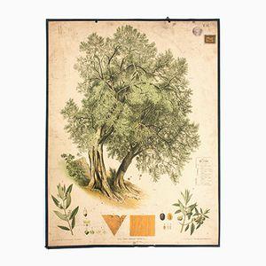 Antique Wall Chart Elm Tree by Johann Kautzky sen. for Gerold & Sohn, 1879