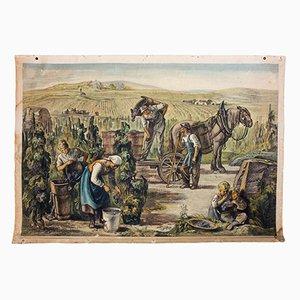 Wall Chart of Grape Gathering, 1922