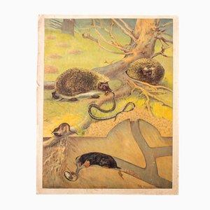 Mole and Hedgehog Educational Chart, 1912