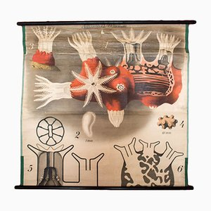 Stampa vintage raffigurante un corallo di Paul Pfurtscheller per Martinus Nijhoff, anni '20
