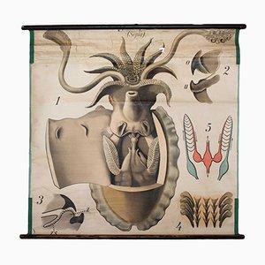 Stampa vintage di una seppia di Paul Pfurtscheller per Martinus Nijhoff, anni '20