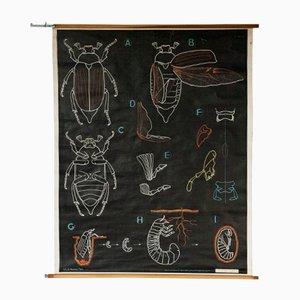 Französische Wandkarte von Dr. Auzoux für Gaillac-Monrocq Paris