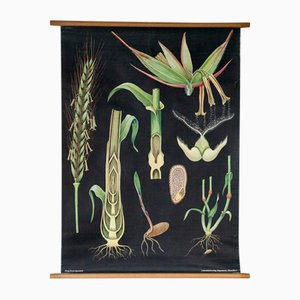 Botanical Wall Chart by Jung, Koch, & Quentell for Hagemann, 1960s