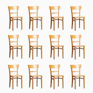 Frankfurter Stühle von Max Stoelcker für Thonet, 1930er, 12er Set