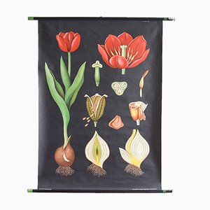 Vintage Tulip School Poster by Jung, Koch, & Quentell for Hagemann, 1963