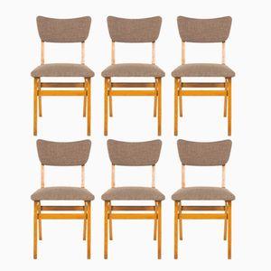French Massive Oak Chairs, 1950s, Set of 6