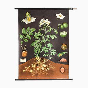 Affiche d'École Pomme de Terre par Jung, Koch, & Quentell pour Hagemann