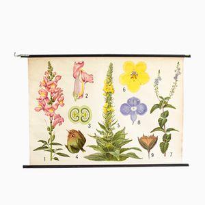 Stampa botanica di Jung, Koch & Quentell per Hagemann