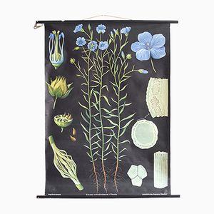 Affiche Botanique Vintage par Jung, Koch et Quentell pour Hagemann
