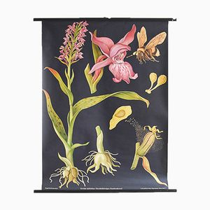 Poster vintage botanico con orchidea di Jung, Koch, & Quentell per Hagemann