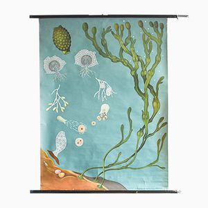 Poster vintage botanico raffigurante l'oceano di Jung, Koch, & Quentell per Hagemann