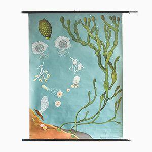Vintage Ozean Botanik Poster von Jung, Koch & Quentell für Hagemann