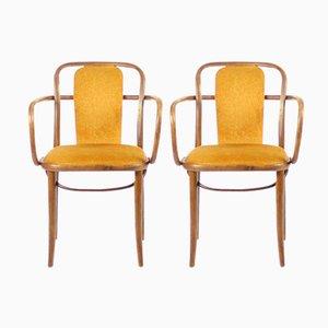Bugholz Stühle mit Goldenem Samt von Michael Thonet, 1920er, 2er Set
