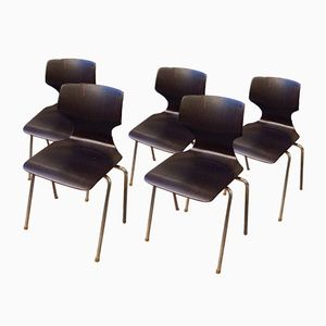 Side Chairs by Elmar Flötotto for Pagholz Flötotto, 1960s, Set of 5