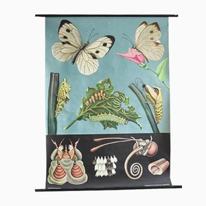 Vintage Butterfly Wall Chart by Jung, Koch & Quentell for Hagemann