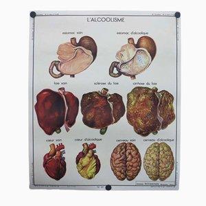 Planche Educative d'Anatomie de l'Anatomie Humaine Vintage Recto-Verso, France, 1950s