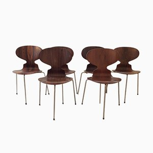 First Edition Palisander Ant Chairs FH 3100 by Arne Jacobsen for Fritz Hansen, 1950s, Set of 6