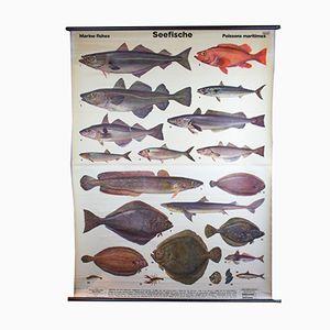 Wall Chart Seafish by Dr. Karl Ruehmer, 1958