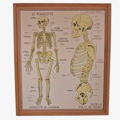 Vintage Anatomie des Menschen Poster, 1950er, 10er Set