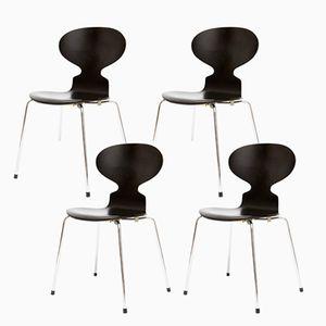 Chaises Ant 3101 Mid-Century par Arne Jacobsen pour Fritz Hansen, Set de 4